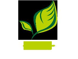 鹿児島県垂水市特産品いんげんを使ったポタージュスープ|たるみず畑【竹之内組が運営】